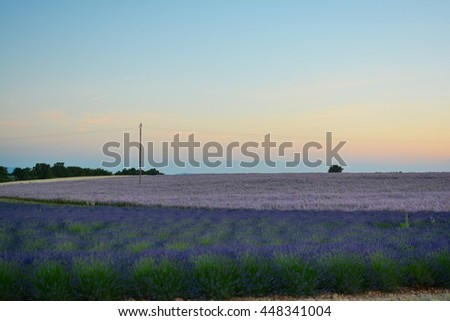 sunset over the hills of lavender and wheat fields with pink flowers of Provence in southern France in the Alps of the French Riviera in the summer