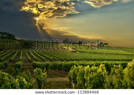 sunset over the vineyards of the South of France - stock photo