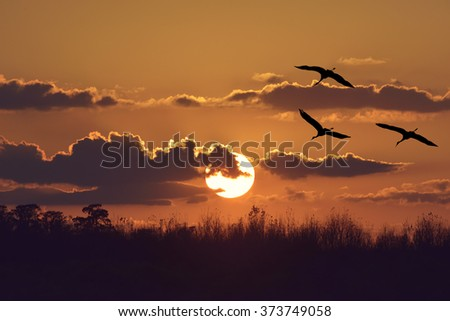 Sunset Over Trees with Sandhill Cranes - stock photo