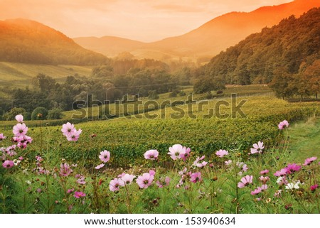 Sunset over vineyard valley - stock photo