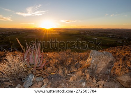 Sunset over vineyards of South Africa with aloe and rocks in foreground