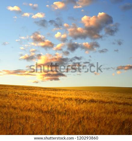 sunset over wheat fields - stock photo