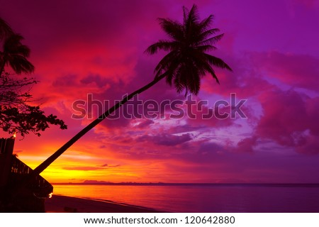 Sunset palm tree silhouette over ocean - stock photo