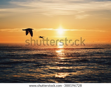 Sunset reflected on the water and birds flying on the horizon