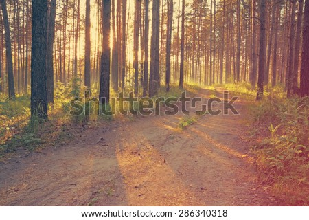 sunset, road in the woods, retro film filtered, instagram style  - stock photo
