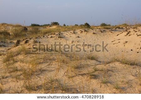 Sunset sand landscape, yellow desert, beach with pine tree and grass