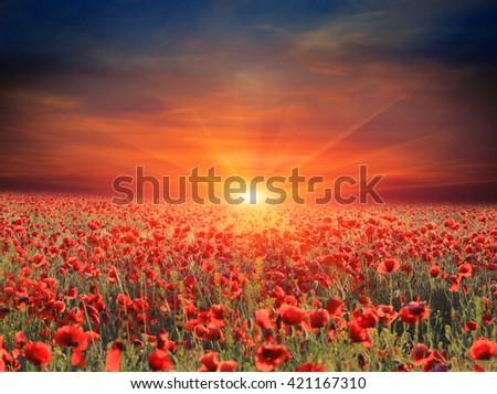 sunset scene over poppy flower meadow - stock photo