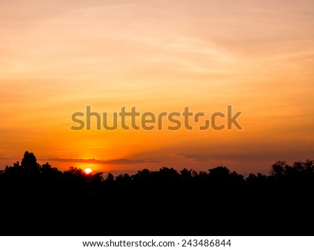 Sunset silhouette view on rice field