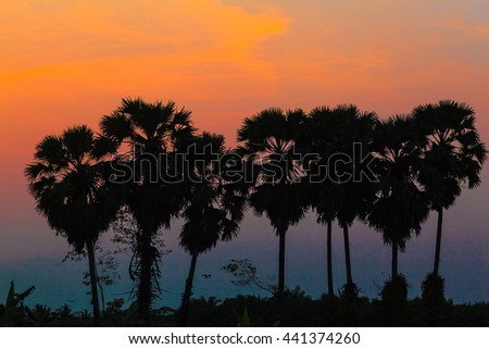 Sunset sky and silhouette sugar palm trees.
