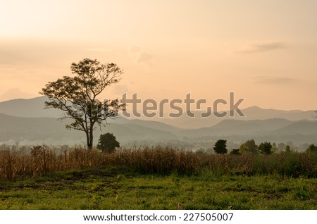 Sunset sky in the natural scenery, meadows and trees