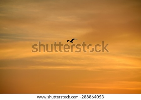 Sunset sky with one bird in flight