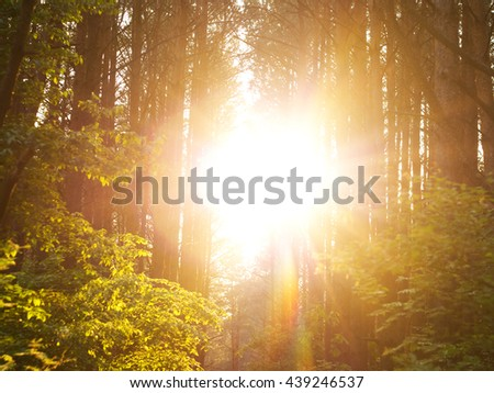 Sunset Sunbeams. Lane Running Through The summer Deciduous Forest At Dawn Or Sunrise.