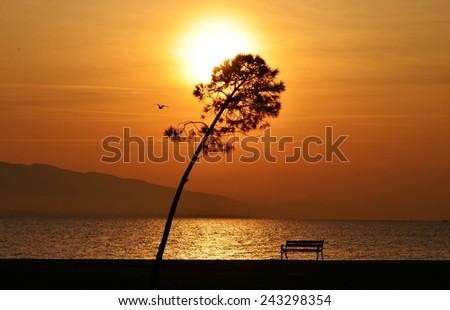 Sunset, Sunlight, Sunset Sky, Sunset Sea, Sunset Tree, Sunset Bird, Bench, Sunset Bench - stock photo
