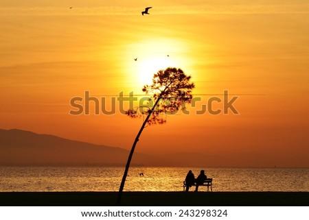 Sunset, Sunlight, Sunset Sky, Sunset Sea, Sunset Tree, Sunset Bird, Sunset People, Bench, Sunset Bench, People Sitting Bench - stock photo