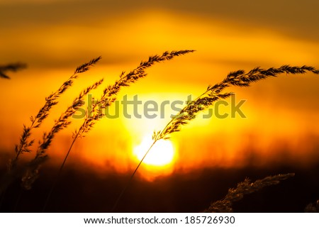sunset sunrise behind a hill silhouete grass field meadow - stock photo