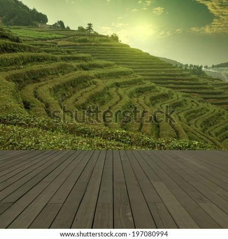 Sunset tea Mountains - stock photo