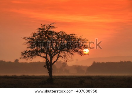 Sunset through an oak tree on field.