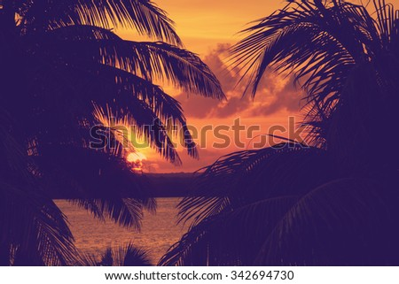 Sunset through palm tree leaf silhouette - stock photo