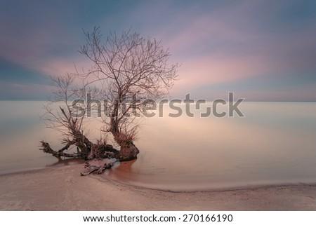 Sunset time. Lonely tree on empty coastline. Long exposure shot. - stock photo