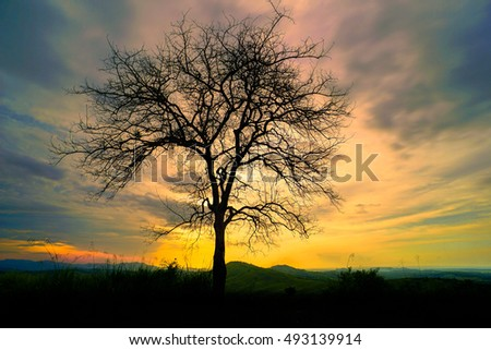Sunset time on the mountain with big tree at Kota Belud,Sabah.