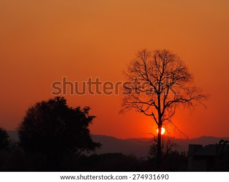 sunset/tree and sunset background.