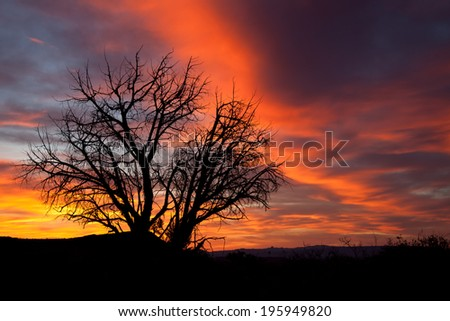 Sunset with a dead tree in the forground - stock photo
