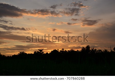 Sunset with beautiful golden sky in the middle of the field.