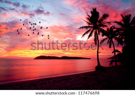 sunset with birds at rebak island, Langkawi, Malaysia - stock photo