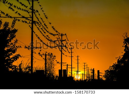 Sunset with cormorants on telephone wires.