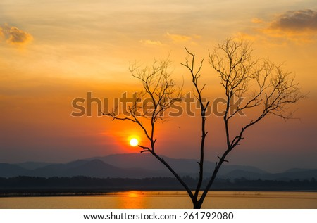 sunset with dead tree - stock photo