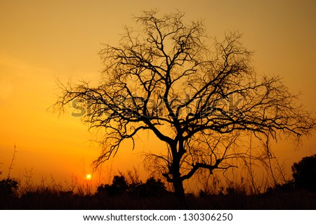 sunset with dead tree in country field