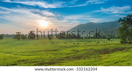 Sunset with Grazing Cows Powell County, KY - stock photo