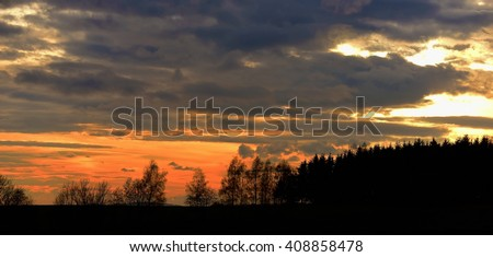 Sunset with needles forest in mountains