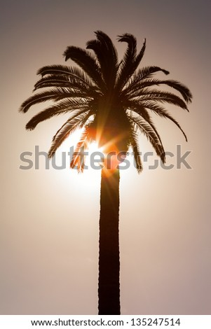 Sunset with palm tree. Silhouette of palm date trees at sunset - stock photo