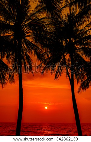 Sunset with Palm trees silhouette in Chang island or Koh Chang, Thailand