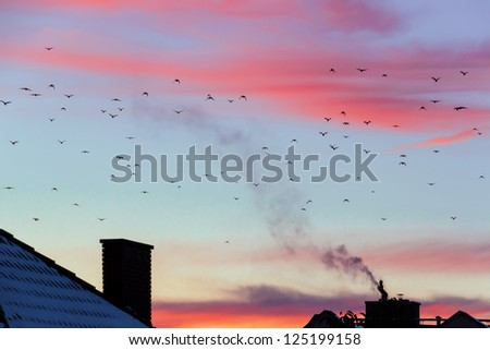 Sunset with shape of birds. Autumn migration of birds in Europe. - stock photo