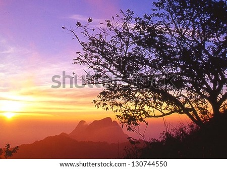 sunset with silhouette tree - stock photo