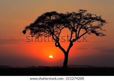 Sunset with silhouetted African Acacia tree, Amboseli National Park, Kenya - stock photo