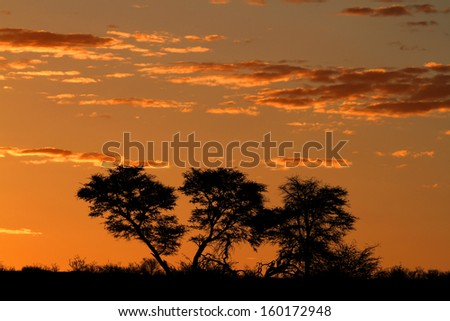 Sunset with silhouetted African Acacia trees and clouds, Kalahari desert, South Africa  - stock photo
