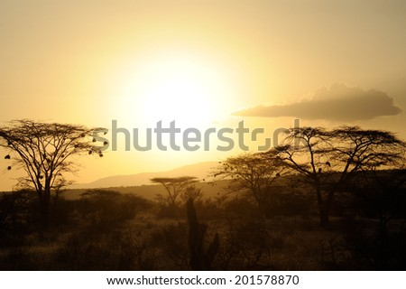 Sunset with silhouetted African savanna trees - stock photo