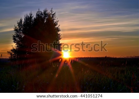 Sunset with sunbeams. Forest field and tree. - stock photo