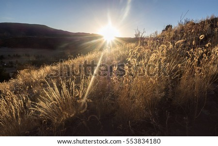 Sunset with sunbeams shining through tall grass