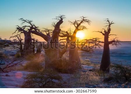 Sunset with the african boabab, Kubu Island, Botswana - stock photo