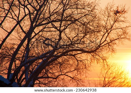sunset with tree - stock photo