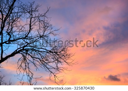 sunset with tree shadow  - stock photo
