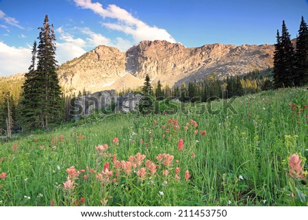 Sunset with wildflowers in the Wasatch Mountains, Utah, USA. - stock photo