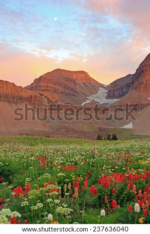 Sunset with wildflowers, Mount Timpanogos, Utah, USA. - stock photo