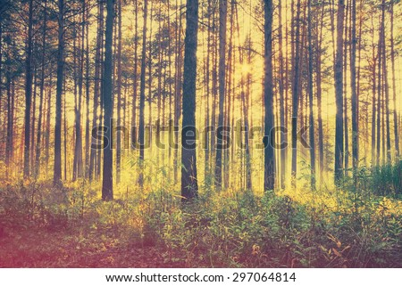 sunset woods, retro film filtered, instagram style  - stock photo