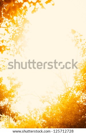 Sunshine of Autumn in the park. - stock photo
