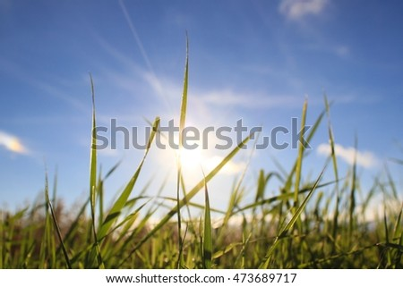 Sunshine on blades of grass against blue sky